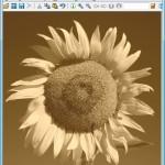 IrfanView: Schwarz-Weiß-Fotos und Sepia-Effekt selbst gemacht